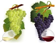 葡萄与葡萄酒矢量素材红白