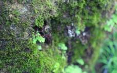 崖壁上的苔藓图片