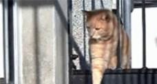 令人捧腹的小貓咪圖片