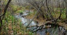 林中小河(非高清)图片