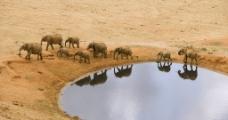 大象迁徙图片