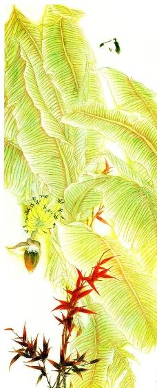 绢本芭蕉叶图片