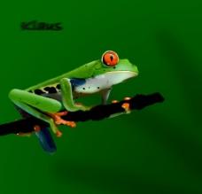 鼠绘树蛙图片