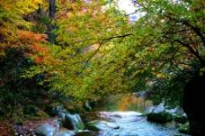 山溪有声叶色浓图片