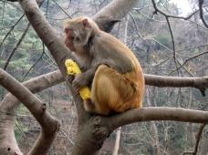 凝神的猴子