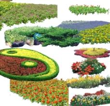 草花灌木图片