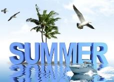 夏天海鳥椰樹圖圖片