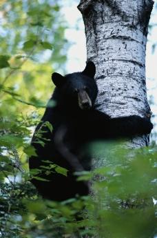 动物世界 动物 熊猫 动物大图