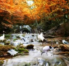 深秋 瀑布图片