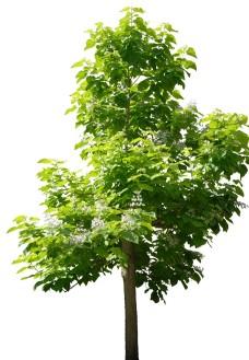树本つばさ照片
