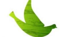 鴿子飛鴿環保背景圖片