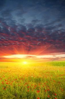 夕阳下的唯美草原 野花图片