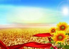 小麦丰收图片