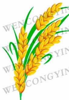 水稻穗图片