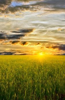 夕阳下的唯美草原图片