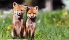 狐狸播放器最新版下载
