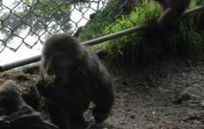 四川峨嵋山上的猴子图片