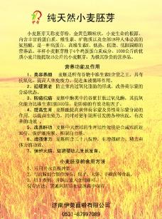 小麦彩页图片