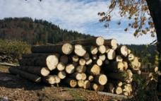 大树树木图片