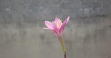 兰花鲜花图片