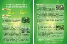 蔬菜彩页图片