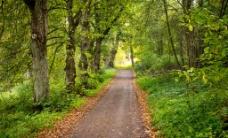 自然森林风光图片
