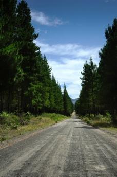 道路森林风光图片