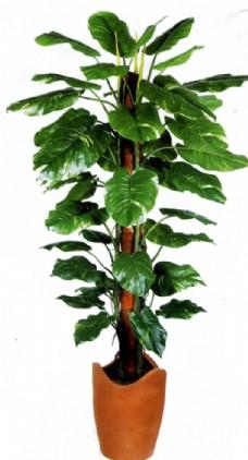 png格式室内绿植图片