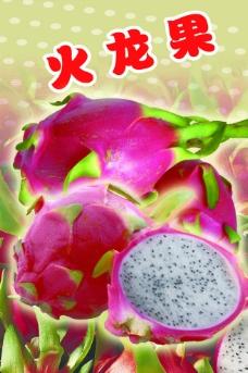 火龙果图片