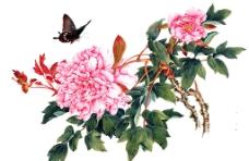 牡丹 牡丹国画图片