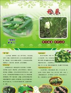 彩页 传单 样本 美食 秋葵图片