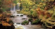 秋季溪流图片