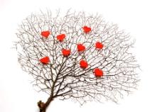 满树爱心图片