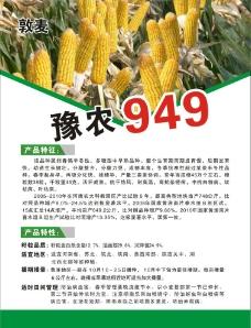 玉米海报图片