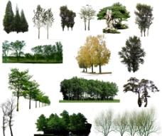 树素材(非高清)图片