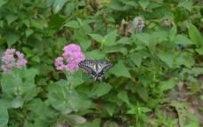 断翅的蝴蝶图片
