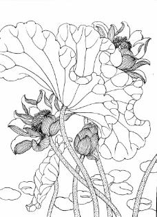 工笔画花卉线描荷花图片玩一个暑假小学生图片