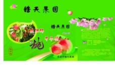 桃子 礼盒图片