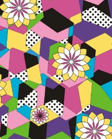 彩色三角花图片
