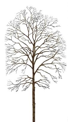ps黑白树素材图片