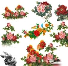 花卉分层图片