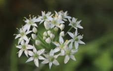 花卉摄影图图片