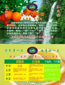 脐橙宣传彩页图片