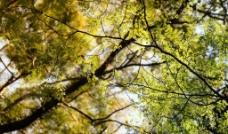 树叶树枝图片