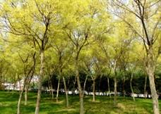 树林绿地图片