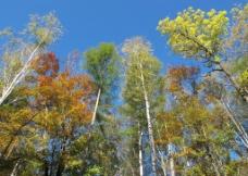 色彩丰富 树叶图片