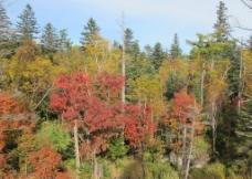 秋天色彩图片