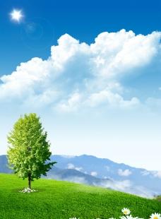草地上的大树图片