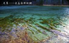 九寨树珊瑚图片