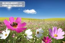 户外 大自然 花丛 蝴蝶 影骑 韩国实用设计分层源文件 PSD源文件